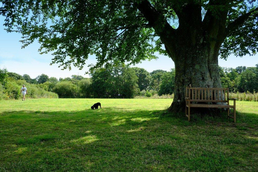 South Lytchett Manor mowed dog walking field