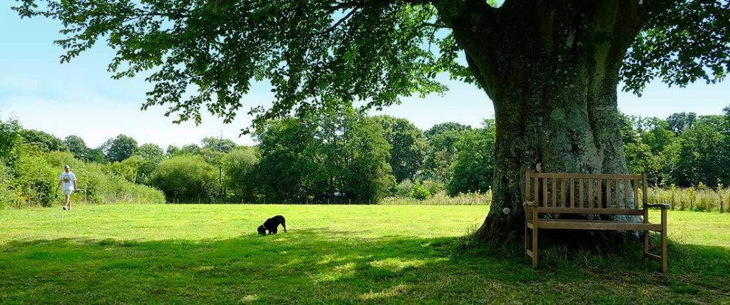 Dog Friendly South Lytchett Manor