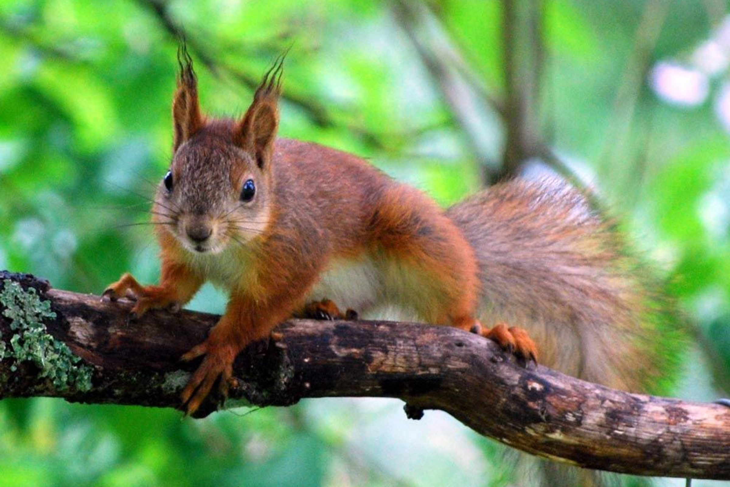 Red Squirrels can be found on Brownsea Island in Poole Harbour.