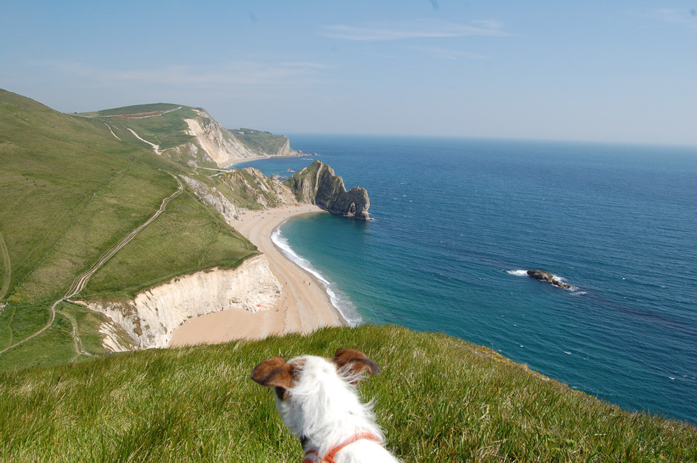 View of Durdle Door Beach with dog.