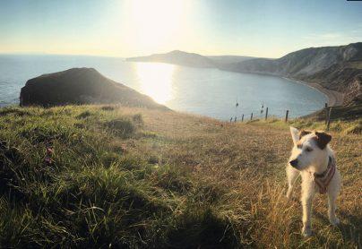 Dog Friendly Camping Heaven