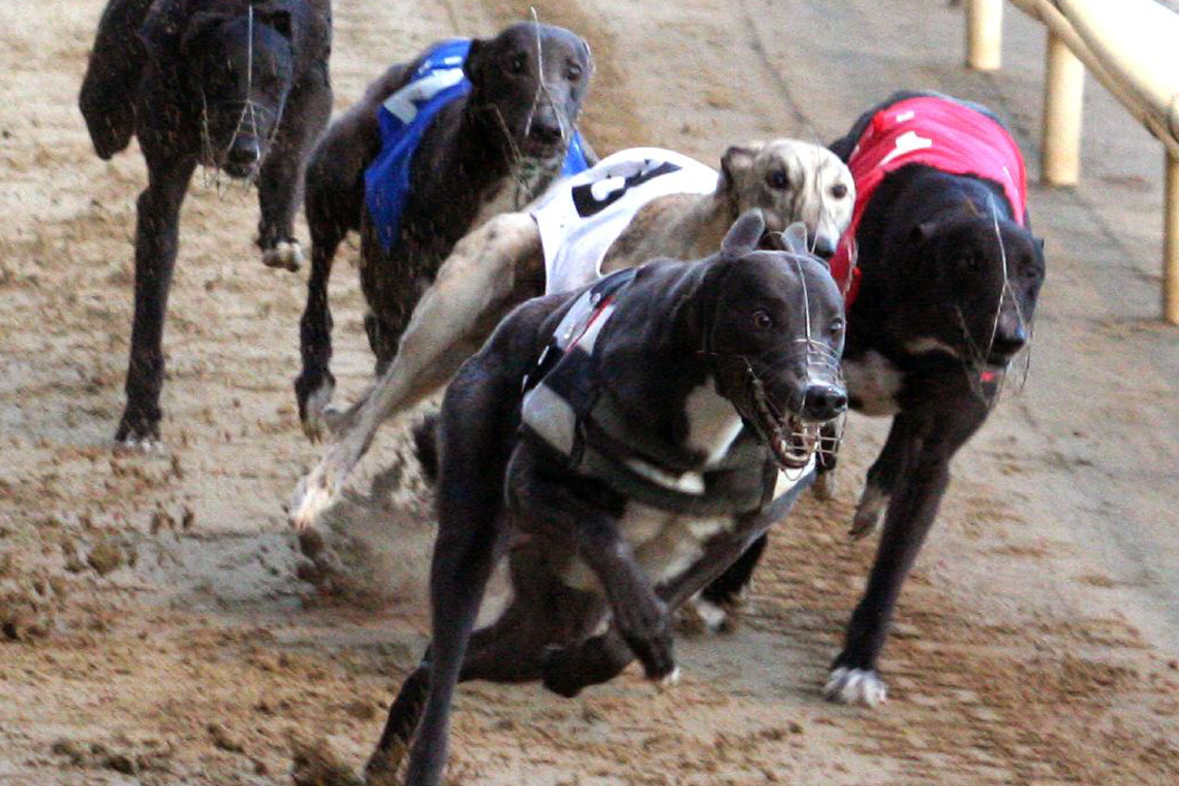 Greyhound racing at Poole Stadium