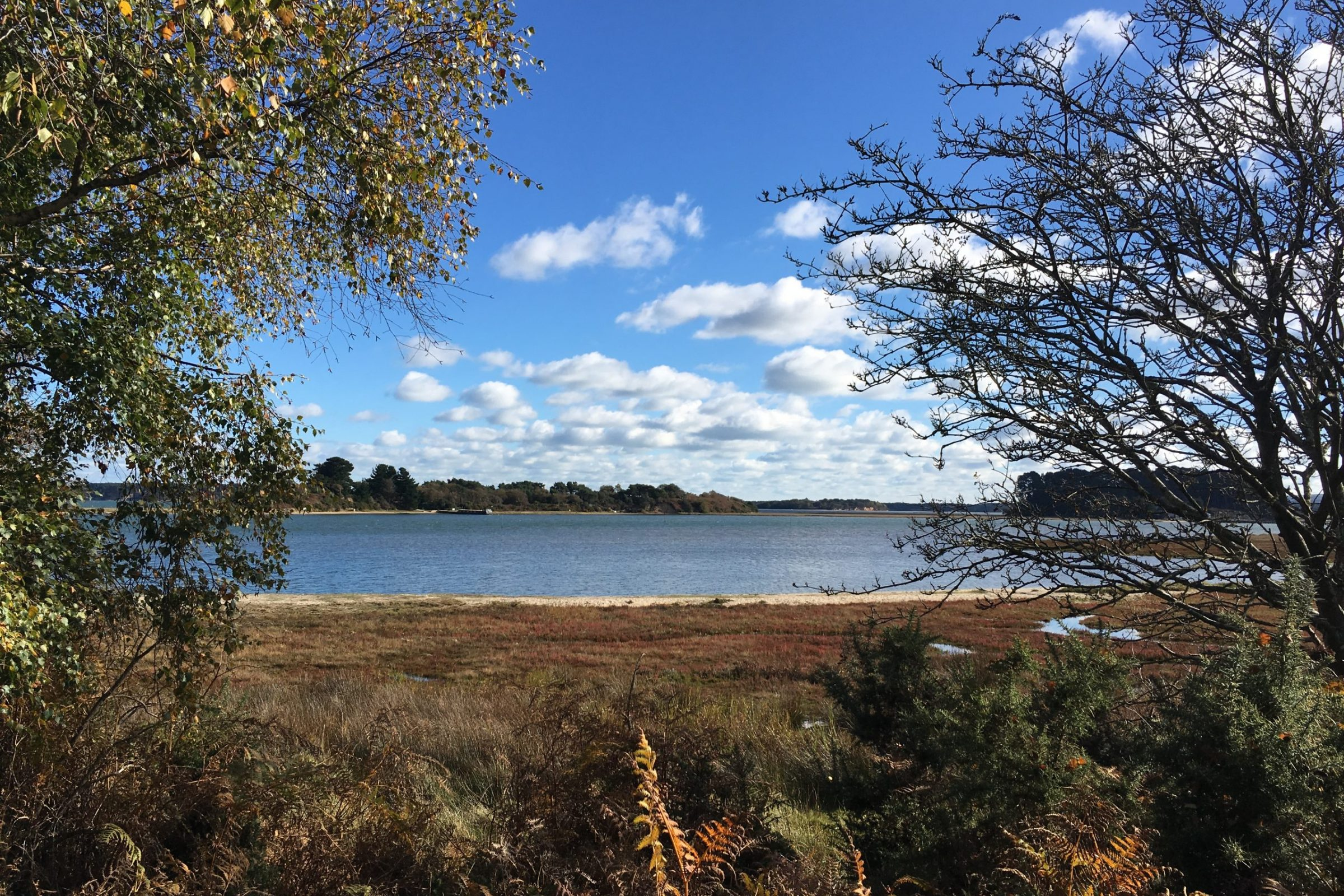arne nature reserve RSPB