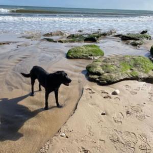 dog friendly beaches in dorset