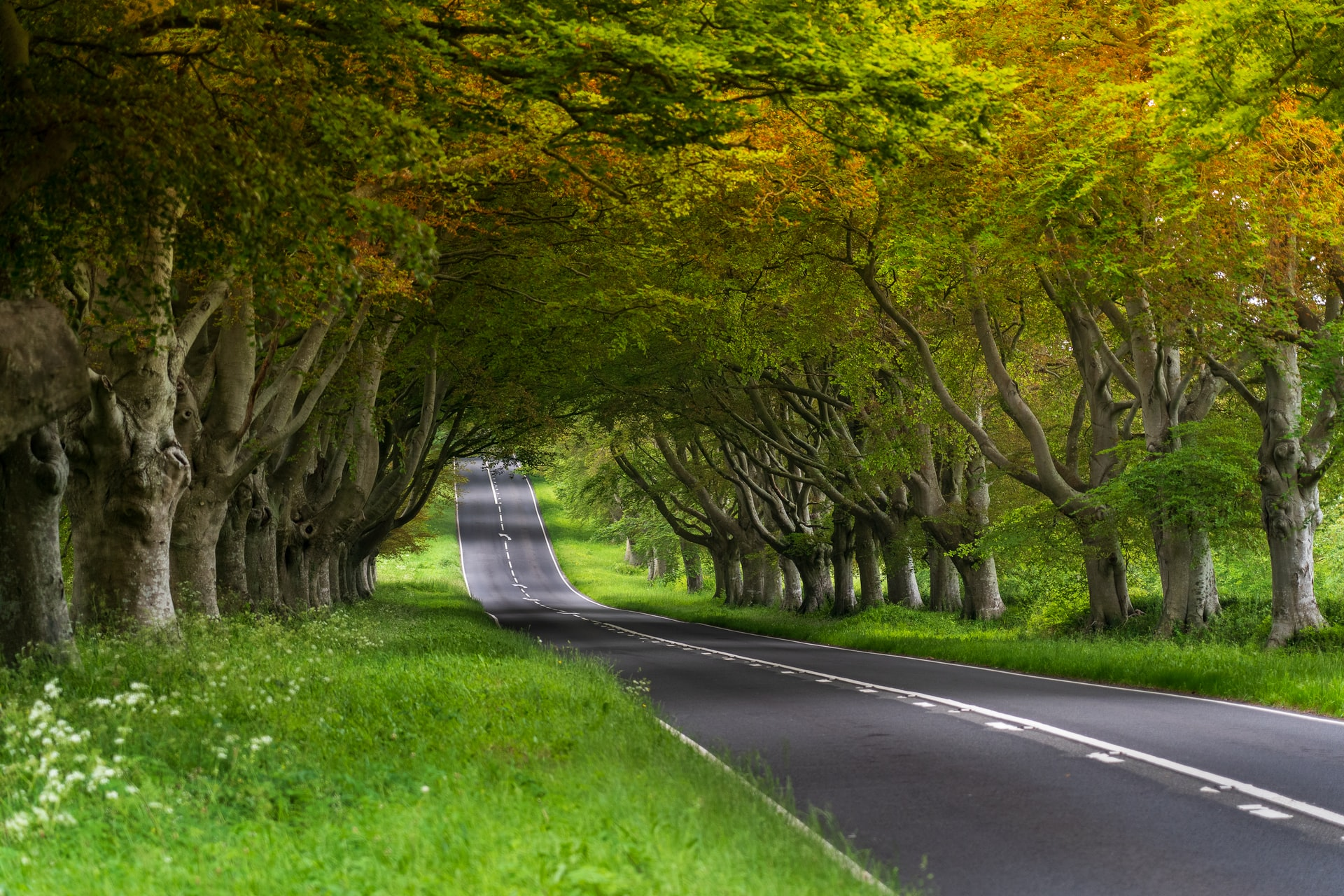 Kingston Lacy autumn